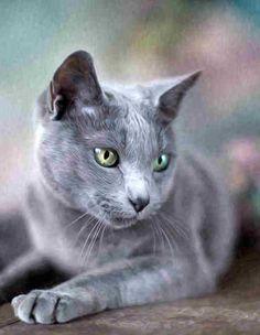 Those wonderful green eyes make them ever so mysterious!