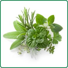 Tip: How To Dry Fresh Herbs