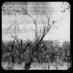 Black and White Landscape Photo, TTV Photography Print, 8x8 Trees, Gray via Etsy.