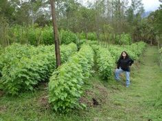 perennial staple crops - great information and a list
