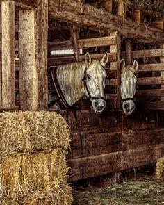 A Horse is a Horse by erhewitt50