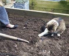 My cat will work in the garden