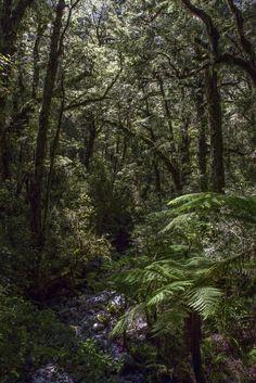 The dense lichen coated forest of Fiordland National Park [OC] [34565184] #reddit