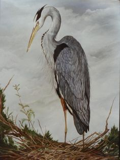 """""""Blue Heron"""" 22 x 34 watercolor  SOLD  This watercolor is of one of my favorite subjects, the Blue Heron. They are the prettiest birds and ..."""