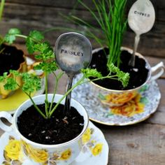 plant markers out of spoons, stamped
