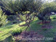 Tree Shaping (Garden People)