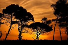 "'""African"" sunset @ Kaiafas beach' by Hercules Milas African Sunset, Beach Umbrella, Most Beautiful Beaches, My Escape, Beach Look, Pine Tree, Sunrises, Hercules, Golden Hour"