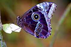 Butterfly - Purpley-blue, white & black and other colours.
