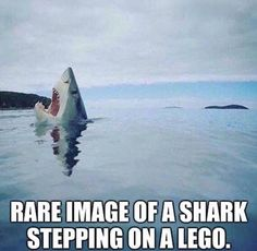 Rare image of a shark stepping on a Lego.......for all of us parents who have felt the pain!