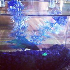 My pet fishyy