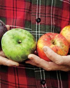 Neat article about an heirloom apple preservation farm. May I be a pomologist?
