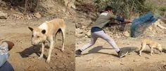 video rubia con un enorme perro