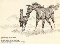 Black Beauty Paul Brown Equestrian Art St Ed Anna - Mar Black Beauty Paul Brown Equestrian Art St Ed Anna Sewell Horses Collectors Vintage Horse Book Illustration More Information Find This Pin And More On Pa Cartoon Sketches, Animal Sketches, Horse Drawings, Animal Drawings, Paul Brown, Horse Sketch, Horse Illustration, Horse Books, Horse Portrait