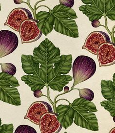 Wallpapers and Patterns - katie-scott Botanical Drawings, Botanical Prints, Art And Illustration, Fig Drawing, Flash Art, Gouache Painting, Map Art, Watercolor Art, Art Drawings