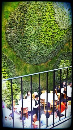 Green wall in Mexico City. This is in a interior patio in the building The Shops Downtown in Centro Historico.