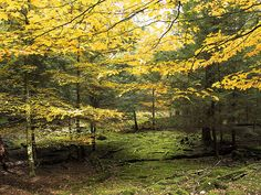 Cook Forest State Park has some of the oldest, tallest trees in the country.