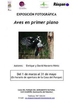 Hasta el 31/05. Exposición de fotografías de aves en primer plano. Quintanilla del Rebollar. En horario de apertura de la Casa del Parque.