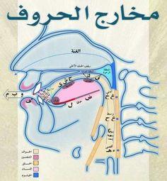 How To Read Quran, Learn Quran, Coran Tajwid, Tajweed Quran, Learn Arabic Online, Learn Arabic Alphabet, Quran Book, Arabic Lessons, Islam For Kids