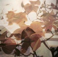 Juxtapoz Magazine - Double-Exposure Paintings from Pakayla Rae Biehn Double Exposition, Multiple Exposure, Double Exposure, Collage, Pictures To Paint, Painting Pictures, Heart Art, Figurative Art, Photo Art