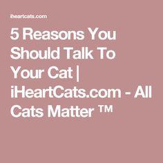 5 Reasons You Should Talk To Your Cat | iHeartCats.com - All Cats Matter ™