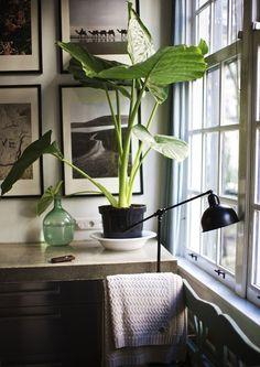 Plantas para interiores - Plantas na decoração Elephant Ear Plant, Elephant Ears, White Elephant, Interior Plants, Interior And Exterior, Interior Design, Nature Green, Plant Pictures, Home And Deco