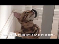 Brooklyns DIY - How to make a catwheel Cat Wall Furniture, Cat Exercise Wheel, Cat Room, Cat Behavior, Animal Projects, Animals And Pets, Nature Animals, Cool Diy Projects, Diy Stuffed Animals