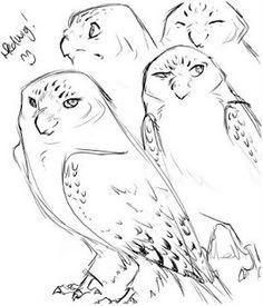 Edwiges (Hedwig), uma coruja das neves de olhos âmbar, foi entregue a Harry Potter como presente de aniversário por Rúbeo Hagrid em 31 de julho de 1991. Hagrid adquiriu a coruja no Empório das Corujas, no Beco Diagonal. Harry achou o nome para a coruja enquanto lia seu livro de História da Magia.