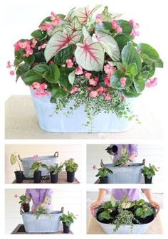 Calling all porches! This shade-loving mix is just for you! Ingredients: White Q. Calling all porches! This shade-loving mix is just for you! Ingredients: White Queen Caladiums, Whopper Begonia, Variegated Creeping Fig by Carmen Johnston Gardens Pot Jardin, Deco Floral, Container Flowers, Shade Plants Container, Plant Containers, Best Shade Plants, Potted Plants For Shade, Fall Containers, Outdoor Plants