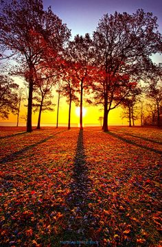 """""""Where You Have Been Is Part Of Your Story"""" Autumn sunrise in Wisconsin. Wisconsin Horizons By Phil Koch. http://phil-koch.artistwebsites.com https://dashburst.com/philkoch/43"""