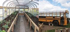 Old school buses are cheaper and stronger than most greenhouses, and best of all, you can move them! Converting retired school buses into RVs and tiny houses has become increasingly popular in recent years, but now a woman from Alberta, Canada has found another use for them. Greenhouses are great … Old School Bus, School Buses, Newfoundland Tourism, Traditional Greenhouses, World Office, Walk In Freezer, Polycarbonate Greenhouse, Plants For Raised Beds, Short Bus