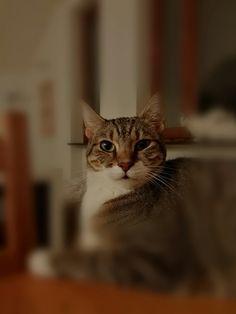 Gli occhi di un gatto sono finestre che ci permettono di vedere dentro un altro mondo.