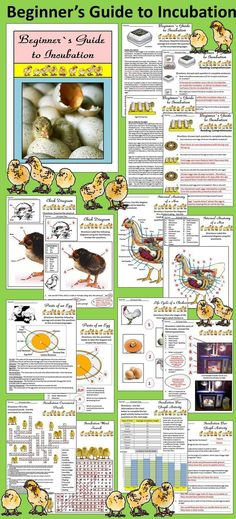 Beginner's Guide to Incubation: This packet gives an in-depth study of the incubation of chicken eggs. Contents include: * 13 pages of reading selections and short answer questions * Egg Incubation Journal Sheets * Chick Growth Journal Sheet * Parts of