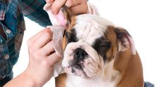 Brushing your dog's teeth is never a bad idea. But when your dog resists brushing, then you should try out some other dog brushing teeth alternatives. Dog Smells, Dog Teeth, Hygiene, Teeth Cleaning, Butt Workout, Dog Love, Your Dog, Pets, Important