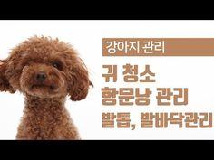강아지 귀청소, 항문낭 짜기, 발톱 발바닥 관리 [24시수동물병원] - YouTube Teddy Bear, Youtube, Poster, Animals, Animales, Animaux, Teddy Bears, Animal, Animais