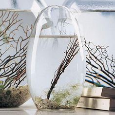 EcoSphere is a calming balance of earth, water, air and life--all parts of a working self-sufficient ecosystem that's much more than science; it's an original work of art.  Cheaper at Target but can't pin from there
