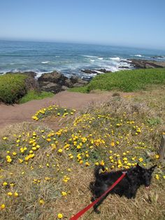 Fiscalini Ranch Preserve in Cambria