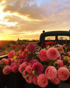We can't get enough of these shades of pinks! Dawn of runs a flower farm in the rural prairies of Saskatchewan and we are so inspired by her story! We are in awe of these gorgeous hues in these flowers! Spring Aesthetic, Nature Aesthetic, Flower Aesthetic, Flower Farmer, Belle Photo, Pretty Pictures, Flower Power, Planting Flowers, Flowers Garden