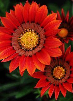 Blooming intensity..... by shepherdmanswife