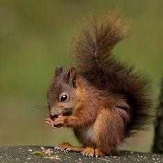 Prachtig eekhoorntje