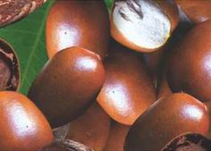 Nigeria's Shea Butter Market Can Yield $2 Billion Yearly – Experts
