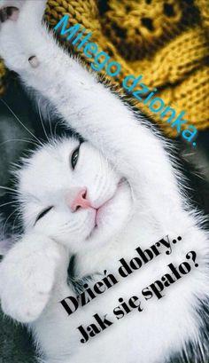 Good Morning, Humor, Dom, Cats, Buen Dia, Gatos, Bonjour, Humour, Funny Photos
