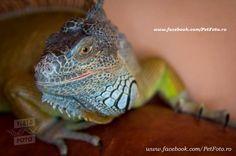 Iguana ta merită cel mai frumos terariu! | Totul despre animale