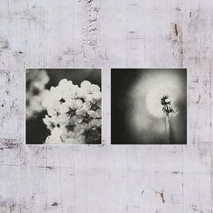 A set of 2 Fine art photography Black and white by AylilAntoniu