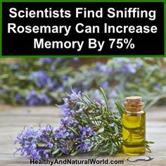 Scientists Find Sniffing Rosemary Can Increase Memory By Natural Home Remedies, Herbal Remedies, Health Remedies, Healing Herbs, Natural Healing, Natural Medicine, Herbal Medicine, Health And Beauty, Health And Wellness