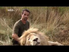 Lions are some of the most dangerous animals known to man. BUT there is one man who is part of their pride. Kevin Richardson, an outdoorsman who lives just 30 miles north of Johannesburg, has an amazing ability to communicate with some of Africas most feared predators.