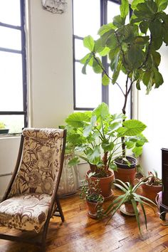 Indoor pots to fill an empty corner..and help keep indoor air clean.  Genius.