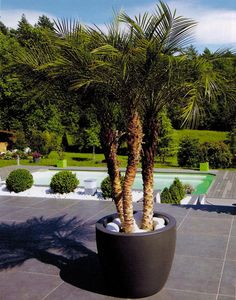 Palmier installé confortablement dans un pot Gallia. Flower Pots, Flowers, Garden Trees, Diy Hacks, Pergola, Home And Garden, Exterior, Patio, Landscape