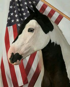 Horses With American Flags Sorrel Horse With America American Flag With Rearing Up Sorrel