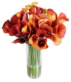 Rust colored Calla Lilies