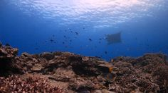 Dept Env - Managing and protecting Australia's Great Barrier Reef